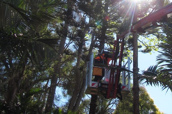 Certified and Insured Arborists carrying out tree services by Green Works Tree Care