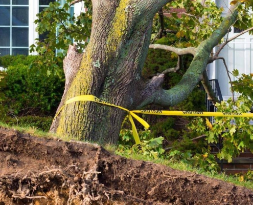Emergency tree removal by Green Works Tree Care