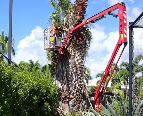 Palm tree pruning for body corporate by Green Works Tree Care