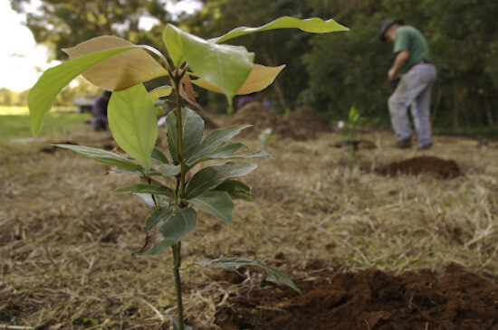 Tree planting by Green Works Tree Care