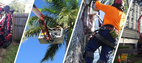 blog header image for Green Works Tree Care
