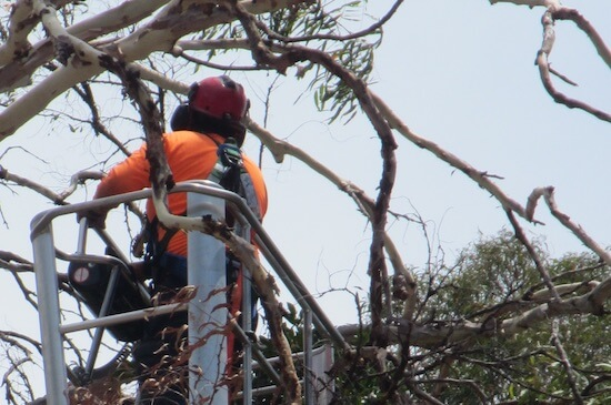 tree maintenance specialists for confined spaces by Green Works Tree Care