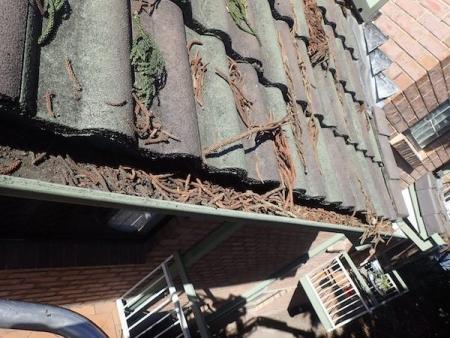 gutters full of leaves