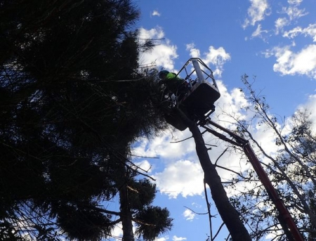 pruning trees by Green Works Tree Care